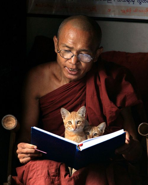 Monk chanting with kittens.  This just makes me really happy for some reason.