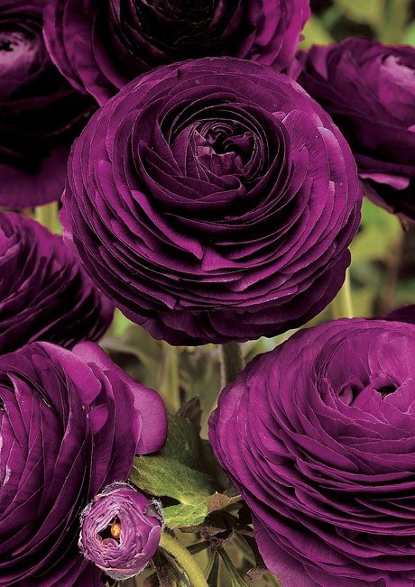 Find This Pin And More On Flowers Purple