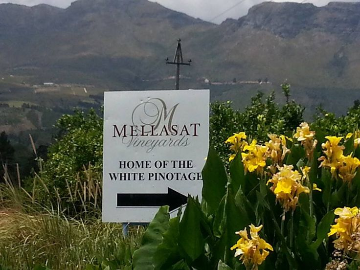 Taste the worlds first White Pinotage #proepaarl