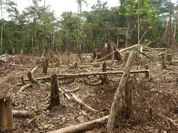 perdida de la biodiversidad en Argentina