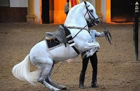 caballos andaluces bailadores - Google Search