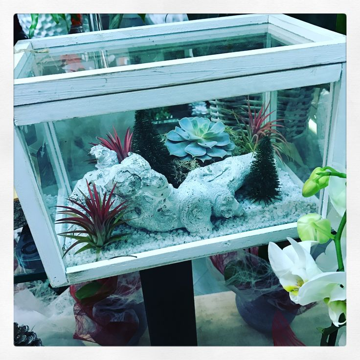 Terrarium con succulente e conifere