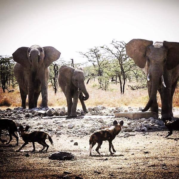 Foto compartida por friday - . KENIA AFRICA