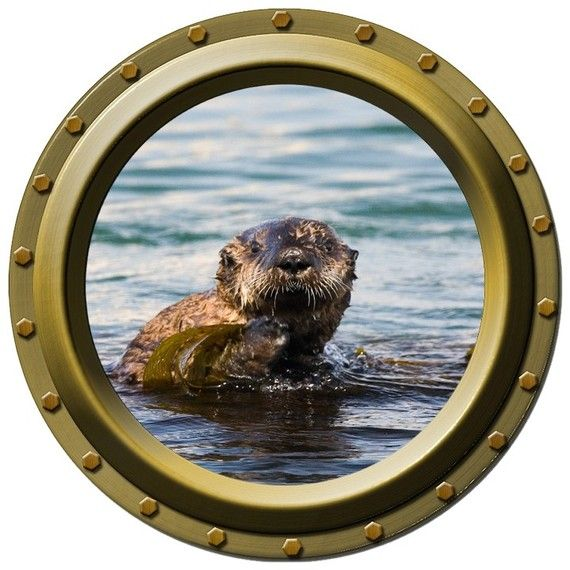 Sea Otter Porthole Vinyl Wall Decal by WilsonGraphics on Etsy, $13.00Wall Decal