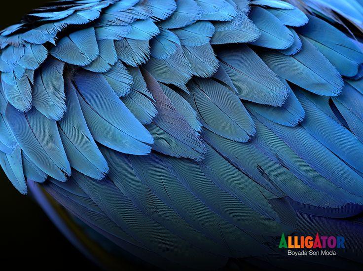 Wisconsin'de bulunan göz alıcı sanat müzesi Milwaukee'nin mekanik tasarımında kuşların kanatlarından ilham alınmıştır. #DoğaEnBüyükMimar #MimariFikirler