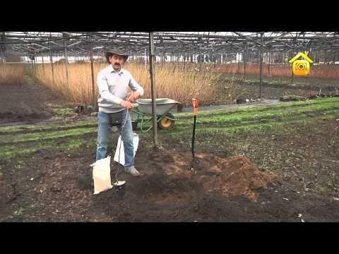 Черешня, вишня, слива... Агротехника косточковых культур // FORUMHOUSE - YouTube