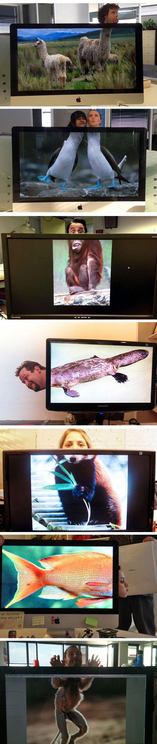 Funny Office Game - Desk Safari