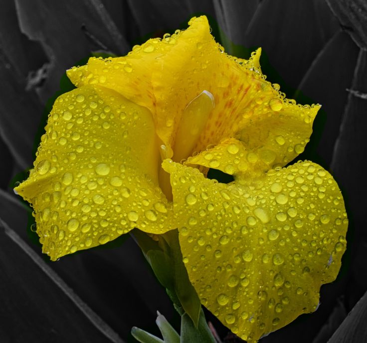 Raindrops on Iris Flower by Wendy Allen on 500px