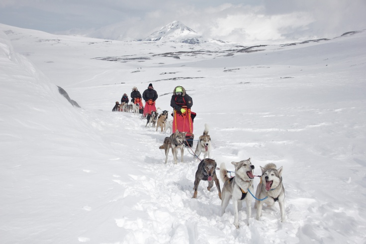 Having to help our teams of dogs by running and pushing the sledges