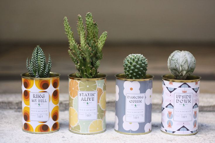 Cactus personnalisable   MilK decoration