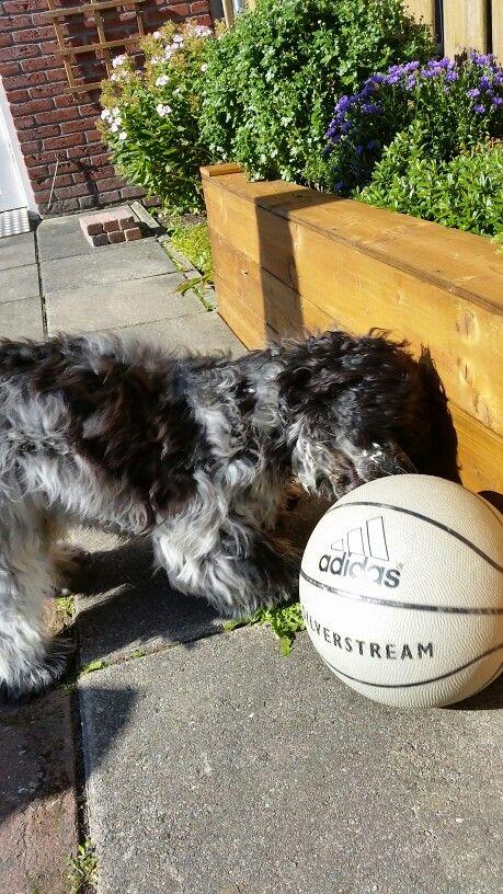 Beetje te groot deze bal