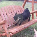 goat falls off porch swing, goat falls off a porch swing, goat fail, goat fails, goat porch swing, porch swing goat, ahhh ricky it's ok, ricky the goat, funny goat, goat funny, funny goats, goats funny, goat falls, goats falling, funniest goat ever, funniest goat videos 2016, funniest goat videos 2017, funniest goat videos 2018, funniest goat videos 2019, funniest goat videos 2020, best goat videos 2016, best goat videos 2017, best goat videos 2018, best goat videos 2019, best goat videos…