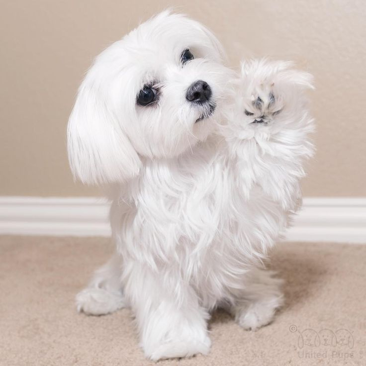 High five friends!! We made it to Friday! #tgif #friday #paw #yay #weekend…