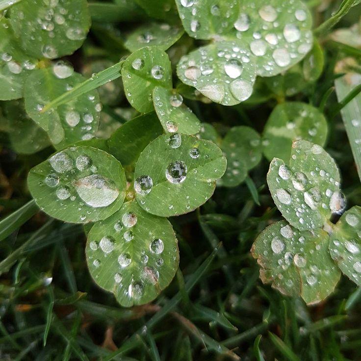 Detalles después de la lluvia, gotas en las hojas, la primavera se acerca. Fotos de naturaleza. Leafs photography, raindrops