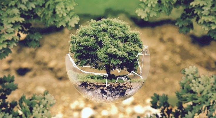 Erst wenn der letzte Baum gerodet, der letzte Fluss vergiftet, der letzte Fisch gefangen ist, werdet ihr merken, dass man Geld nicht essen kann.  - Cree