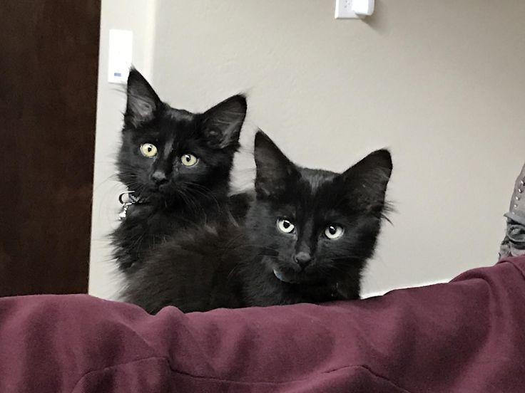 New members to our family! Meet Arthas (left) and Albus (right)