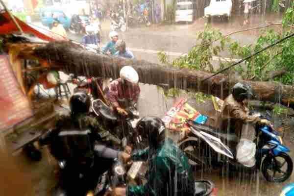 update  Pohon Tumbang, Jalan Akses UI Kelapa Dua Tertutup Lihat berita https://www.depoklik.com/blog/foto-pohon-tumbang-jalan-akses-ui-kelapa-dua-tertutup/