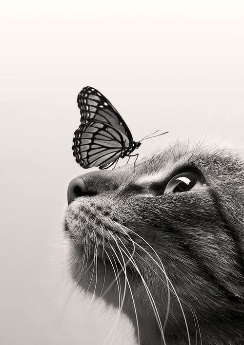 CatButterfly ColorSepia by Dorien Soyez - Exclusive Tshirt For Pet Lovers - You…