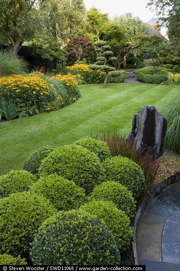 Clipped buxus and cloud pruned Pinus Sylvestris and borders with Rudbeckia Goldstrum - Ealing Garden Story