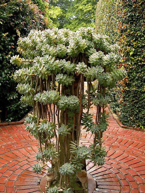 pin von andrea wolf auf sukkulenten pinterest kaktus pflanzen und g rten. Black Bedroom Furniture Sets. Home Design Ideas