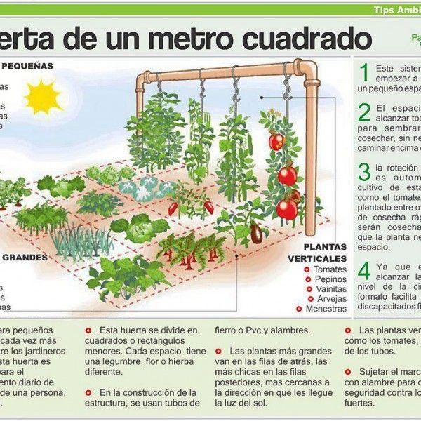17 best images about jardines de plantas en nuestras casas