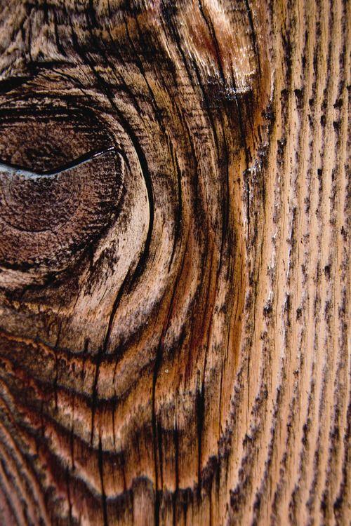 Hay maderas que tienen un sabor y perfume tan propios que, cuando se las huele o se las besa, ya no son olvidadas nunca más en la vida.