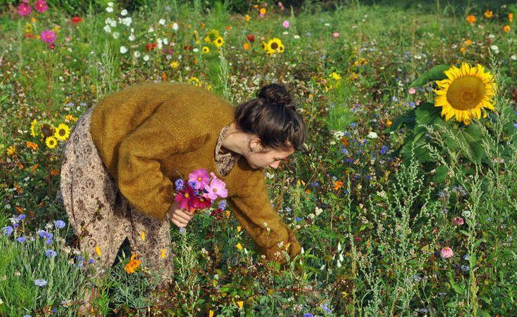 Blumen pflücken auf der Wildblumenwiese