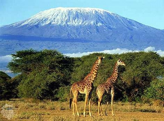 Kilamajaro, Africa - Climb to the top #bucketlist