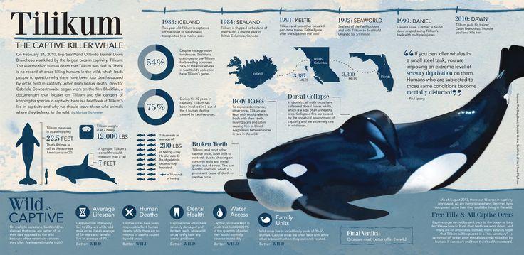 Tilikum infographic