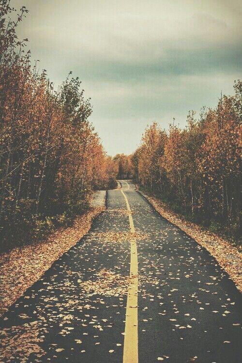 Wenn die Herbstmonate beginnen fängt die gemütlichste Zeit im Jahr an! Die Blätter verfärben sich und es ist Zeit für kuschelige Pullover, Wärmf…