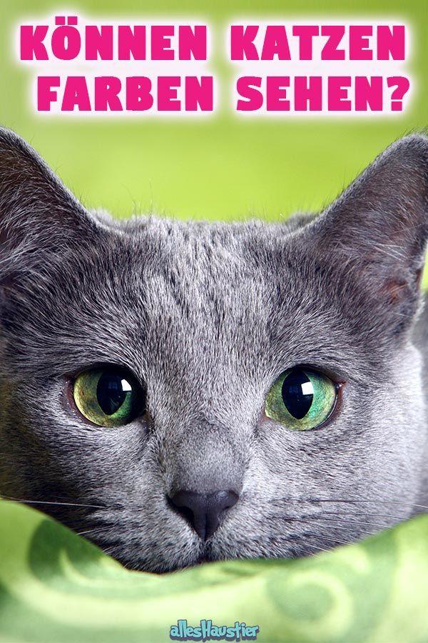 Konnen Katzen Farben Sehen Katzen Haustiere Und Katzenhaltung