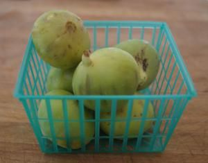 Kadota Figs - A Guide to Fig Varieties
