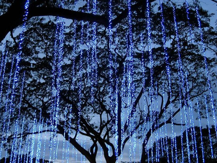 Long Icicle String Lights : string lights hanging from trees- omgoshhh it looks like avatar to me!! Wedding and Marraige ...