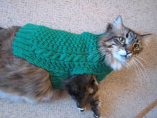 Cat_in_a_dog_sweater__5__small2