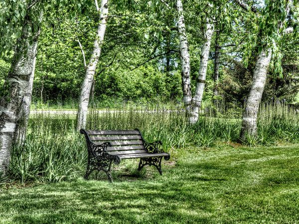 Shaded Bench Art Print by Leslie Montgomery.