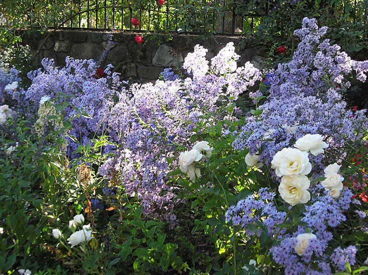 The Color Of The Flowers, The Bloom Time And The Overall Garden Design Are  All · English Cottage ...
