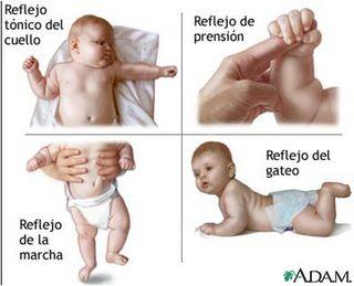 Rosina Uriarte Los reflejos primitivos son movimientos automáticos estereotipados con los que nacen los niños. Tienen el objetivo de ...