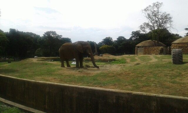 It looked so much bigger in real life #atthezoo