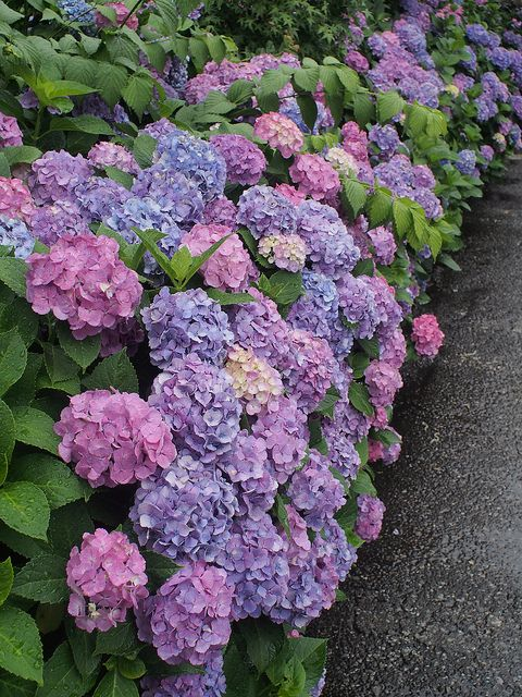 Hydrangeas are my ultimate favorite outside. Nothing like a southern welcome.
