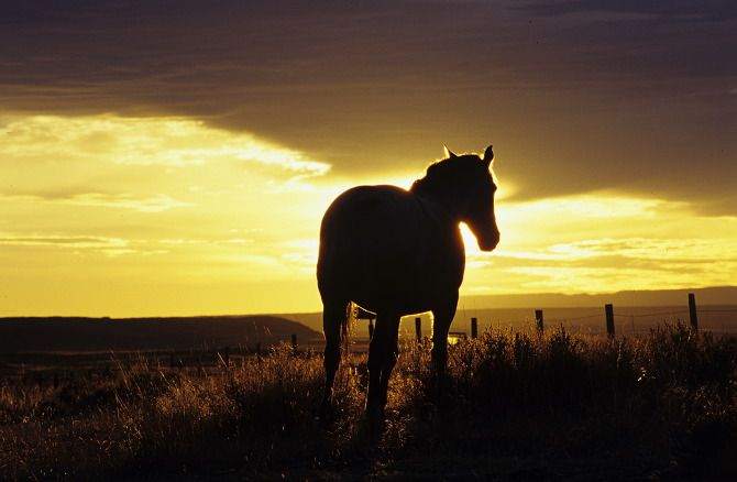 Silhouetted horse at sunset.  Alberta, Canada.