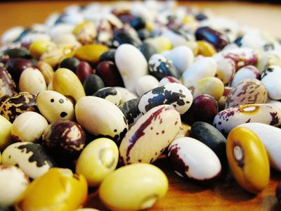Niche Market Bean Varieties - Who knew there were so many?