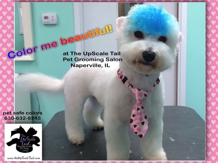 44 best creative color dog grooming images on pinterest groomed at the upscale tail pet grooming salon naperville il theupscaletail solutioingenieria Choice Image