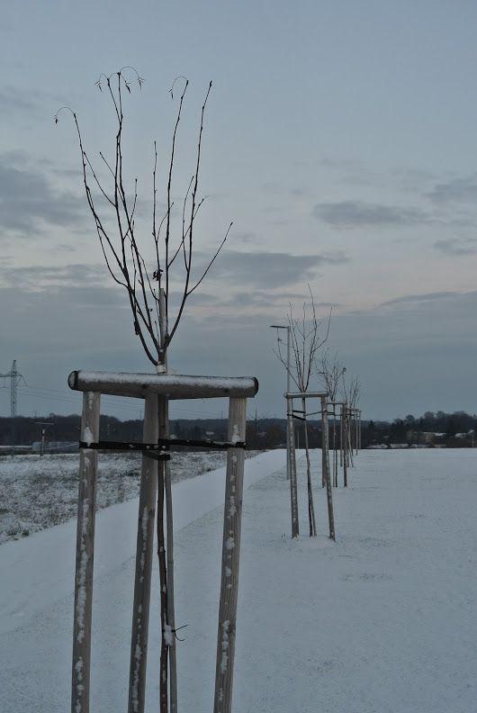 Trees in Winter. - Martin Kříž - Google+