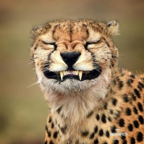Geographicwild  Photo By Saedgraficss Funny Face -8698