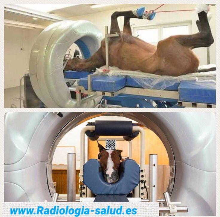 Radiología Veterinaria en Caballos