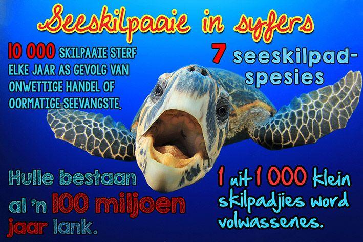 Afrikaanse taakhulp: Seeskilpaaie. Syfers. Feite. Diere. Animals. Hoezit!