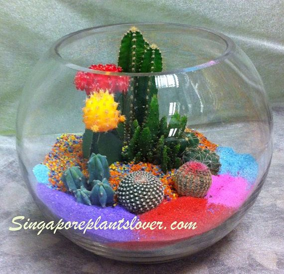 Cactus Terrarium Color SandsMinature by SingaporePlantsLover, $128.00