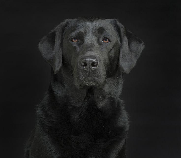 Mejores 227 Imágenes De Doggies En Pinterest Mascotas Accesorios De Perro Y Cosas De Perro