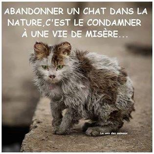 Hélas ! Beaucoup de gens méprisent les chats ; mais, ce qu'ils ignorent, c'est que les chats les jugent et les méprisent !