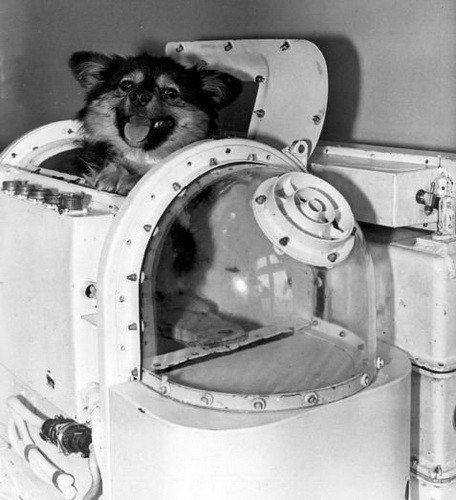 22 февраля в космос отправились собаки-рекордсмены / Интересный космос